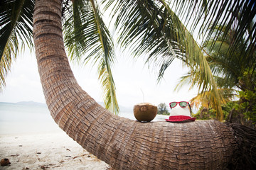 Coconut and hat on palm tree on exotic beach