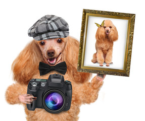 photographer dog