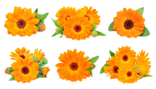 Collage of marigold flowers