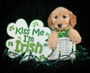Wall Mural - St Patrick's Day Puppy