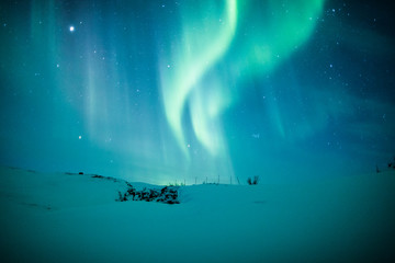 Wall Mural - Northern lights (Aurora borealis) above snow