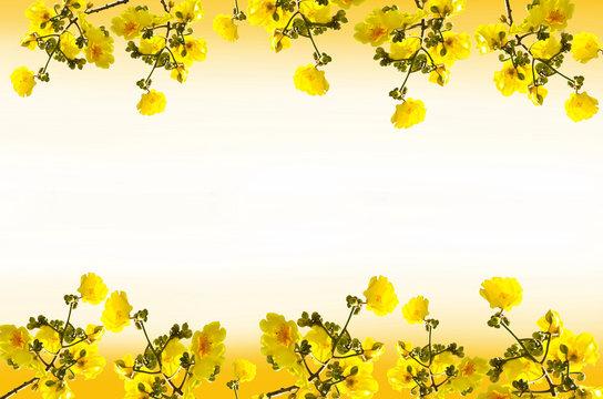 Frame  Tabebuia chrysantha flowers