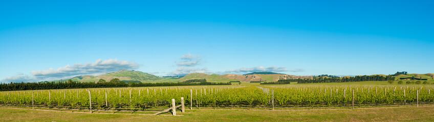 Keuken foto achterwand Nieuw Zeeland Winery of New Zealand