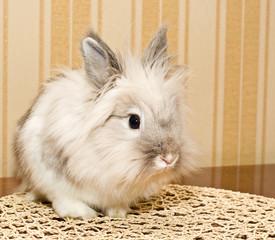 Decorative white Rabbit