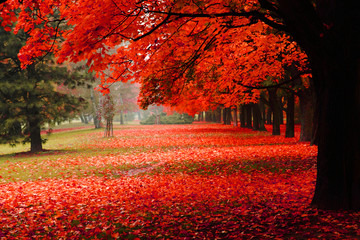 Photo sur Aluminium Rouge traffic red autumn in the park