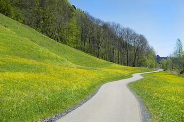 Frühlingwiese mit Weg