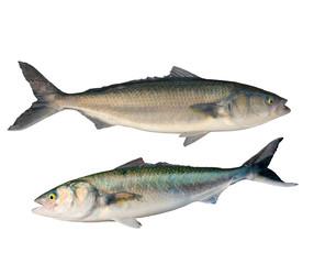 Caraway fish