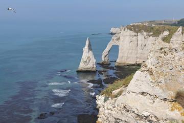 Birds of Etretat Cliff