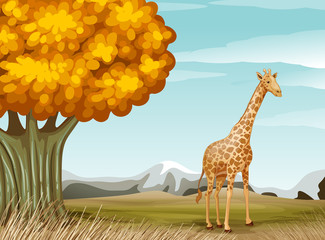 A giraffe near the big tree