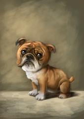 perro bulldog