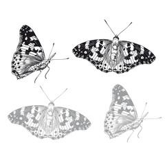 Butterfly set. Vector