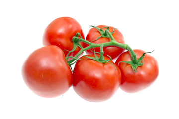 The Branch of Cherry Tomatoes