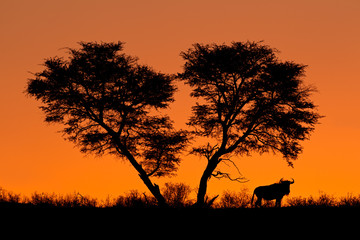 Tree and wildebeest silhouette, Kalahari