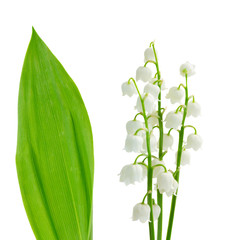 Photo sur Aluminium Muguet de mai flowers and leaves of lilly of the valley