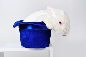 White rabbit in a blue hat