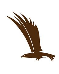 Flying falcon or hawk