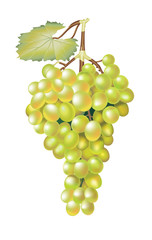 Green fresh grapes