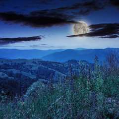 high wild plants at the mountain top at night