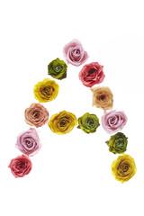Rose font A