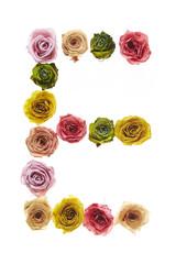 Rose font E