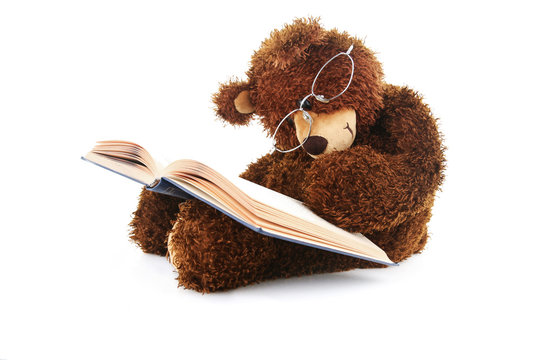 stuffed bear reading a book isolated on white