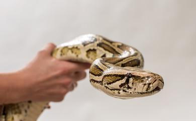 Python in hands