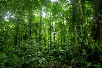 Tropical Rainforest Landscape, Amazon - fototapety na wymiar