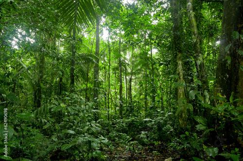 Fototapete Tropical Rainforest Landscape, Amazon