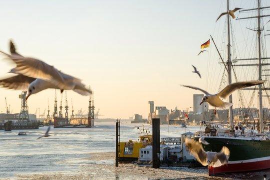 Landschaftsaufnahme der Elbe und des Hamburger Hafens bei Sonnenuntergang mit Möwen im Vordergrund