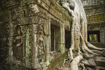 Roots among ruins, Cambodia