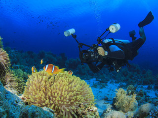 Underwater Photographer and Clownfish