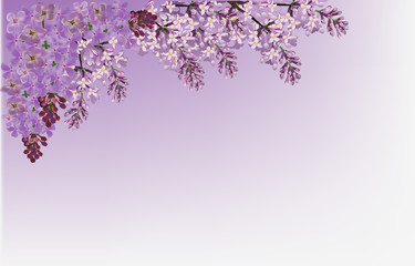 lilac flower branches illustration