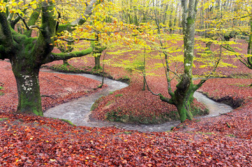 Wall Mural - forest in autumn with stream
