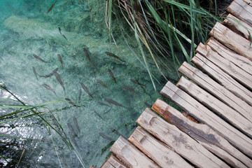 Wooden path and clear water with fish