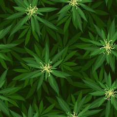blooming cannabis seamless pattern