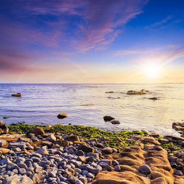 sea wave bring seaween at sunset