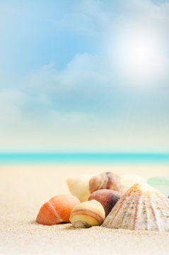 French Beach and Shells - Close Up