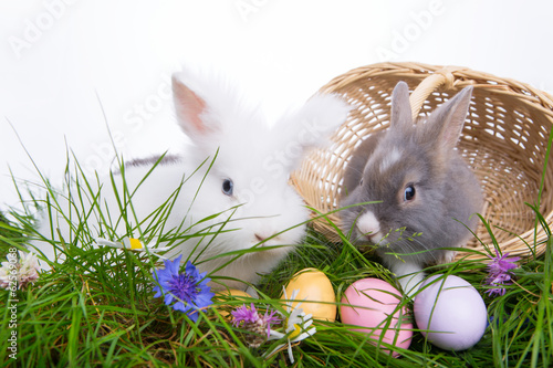 природа животные ккартинки зайцы цветы без смс