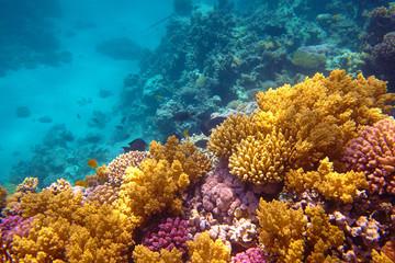 In de dag Koraalriffen coral reef