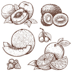 engraving illustration of sweet fruits and berries