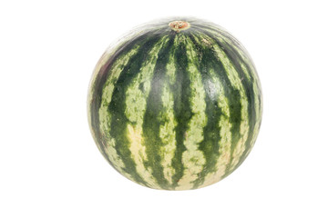 Big striped watermelon