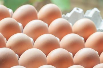 Eggs close-up