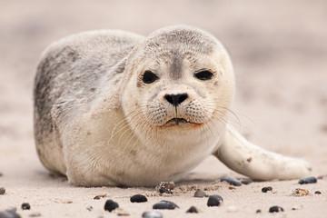 Cute Seal at the beach