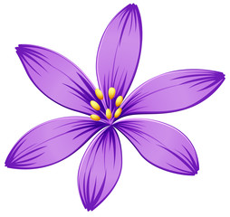 A five-petal purple flower