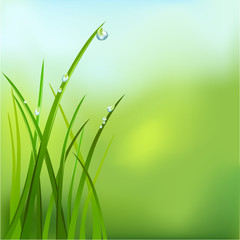 background with grass and dew