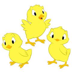 Cartoon Chickens