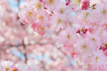 Spring flowers border on background with pink blossom