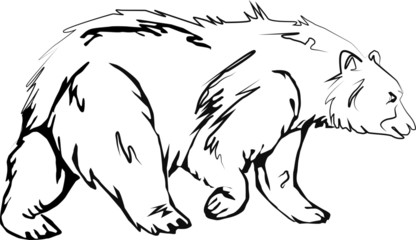 Медведь, Bear ilustration