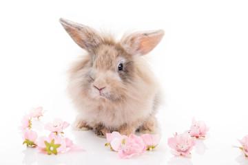 Kaninchen mit Blüten freigestellt