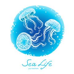 Jellyfish on a round background. Marine life.